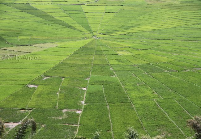 Lingko Spiderweb Rice Fields, Cancar, Flores, Indonesia