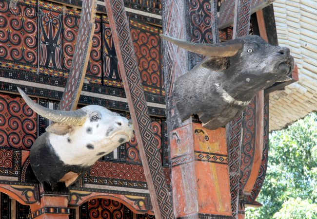The land of the people and their culture that have never failed to amaze me – Toraja 2014